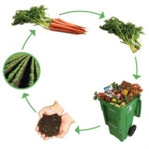food recycle